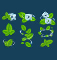 fresh mint organic plant leaf set vector image