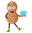 peanut with chemical tube on white background vector image vector image