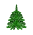 Single Green Fir vector image vector image