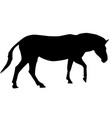zebra black silhouette vector image