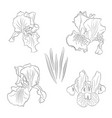 hand drawn flowers and buds in line art style vector image vector image
