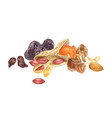 nuts and dried fruits watercolor border vector image vector image