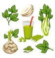 celery plant leaves and smoothie set organic vector image vector image