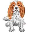 dog Cavalier King Charles Spaniel vector image vector image