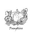hand drawn of three pumpkins vector image