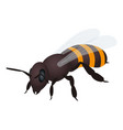 bee icon isometric style vector image vector image