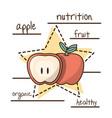 delicious healthy food with nutrition ingredients vector image vector image