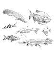 sea and ocean types of fish hand drawn set vector image vector image