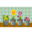 Various potted plants vector image vector image