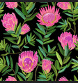 floral seamless pattern with protea flowers vector image