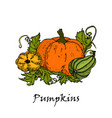hand drawn of three colored pumpkins vector image