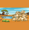 many elephants living by the pond vector image vector image
