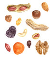 nuts and dried fruits watercolor set vector image