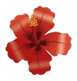 tropical flower icon vector image
