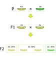 mendelian inheritance diagram vector image vector image