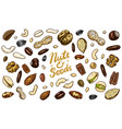 nuts mix background seeds and granule corn and vector image vector image