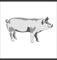 pig side view black and vector image vector image