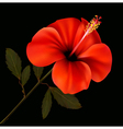 Beautiful red flower on a black background vector image vector image