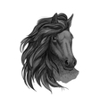 Black horse with passionate glance portrait vector image vector image