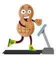 peanut run on conveyor belt on white vector image
