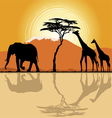 African landscape in sunset time vector | Price: 1 Credit (USD $1)