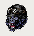 colorful angry biker gorilla head vector image vector image