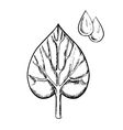 Heart shaped sappy leaf and water drops vector image vector image