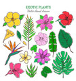 colored exotic and tropical plants set vector image vector image