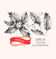 set holly leaves and berries vector image vector image
