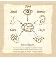 Human sense organs synopsis vintage poster vector image vector image