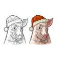 pig head in santa claus hat color vintage vector image vector image