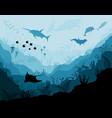 underwater wildlife scat shark dolphins vector image