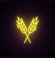 wheat spikes neon sign bright signboard vector image