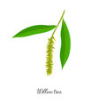 drawing branch willow tree vector image vector image