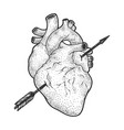 heart pierced with arrow sketch engraving vector image
