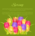 spring poster place for text and colorful bouquet vector image vector image