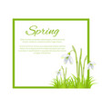spring poster with text in frame colorful flowers vector image