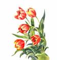 watercolor bouquet red tulips vintage vector image