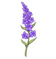 lavender branch with blooming flowers in bloom vector image