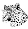 leopard tattoo vector image vector image
