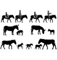 silhouette of donkey and foal vector image vector image