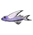 sketch of flying fish vector image vector image