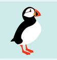 icelandic puffin bird icon vector image vector image