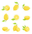 lemon with slices fresh yellow fruit in cartoon vector image