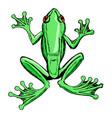 sketch of tree frog vector image
