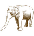 engraving antique indian elephant vector image