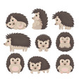 cute hedgehog in various poses set lovely prickly vector image