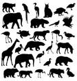 silhouette elephant tiger bear giraffe flamingo vector image vector image