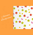 autumn background with colorful leaves card design vector image
