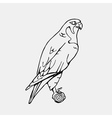 Hand-drawn pencil graphics vulture eagle osprey vector image vector image